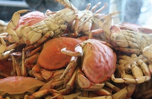 default-ehow-images-a04-tp-su-cook-crab-800x800