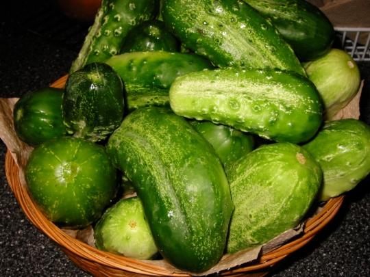 Pickles6
