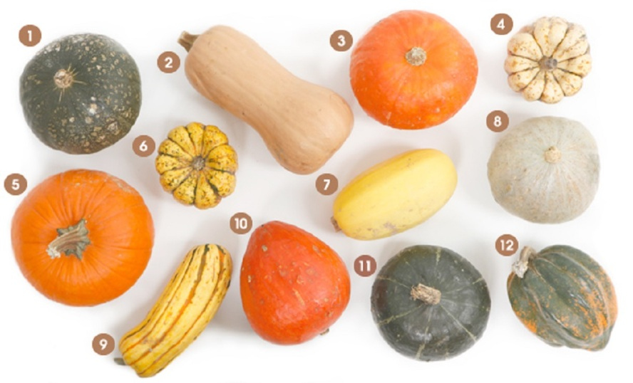 visual-guide-winter-squash_612