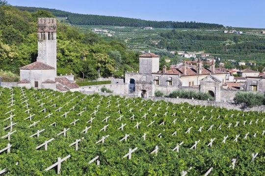 Veneto Vineyards