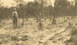 Planting a vineyard at St. Helena. (Courtesy of Julia Morton and NC Dept. of Archives and History)
