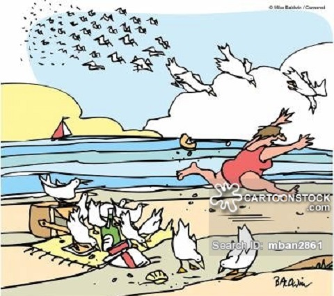 Gullible: those who believe they can have a picnic at the beach.