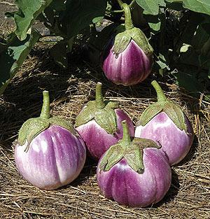 farmeggplant