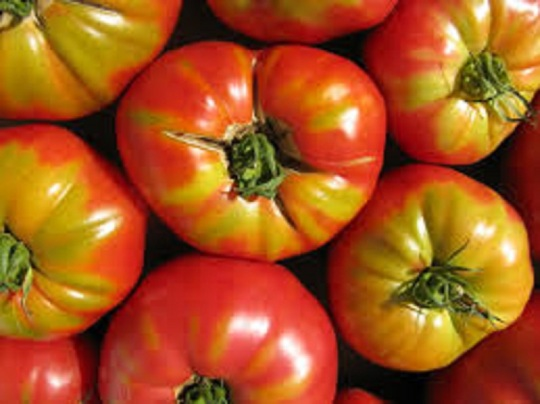 tomatocover